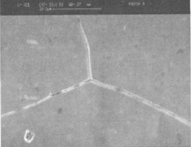 sem x1350 microstructure of inconel 600 - Nickel-based super alloy: Inconel 600 (UNS N06600)